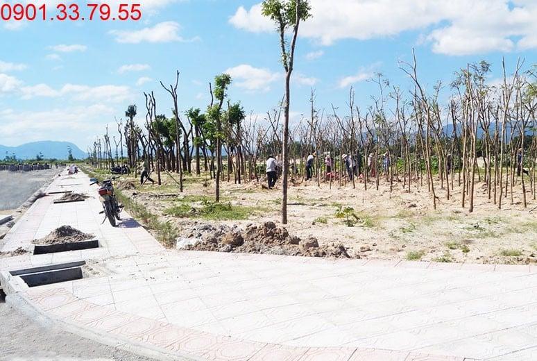 Công tác trồng cây xanh công viên - khu D16 Golden Bay Hưng Thịnh