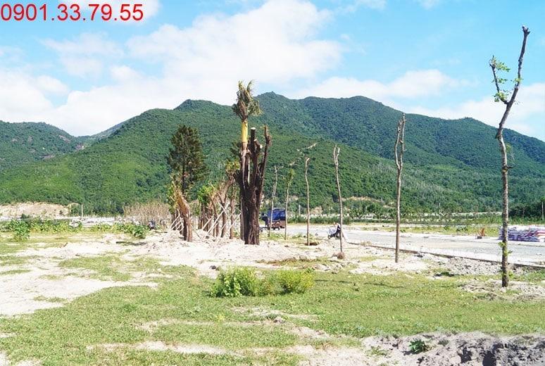 Công tác trồng cây xanh công viên - khu D16 Golden Bay Nha Trang
