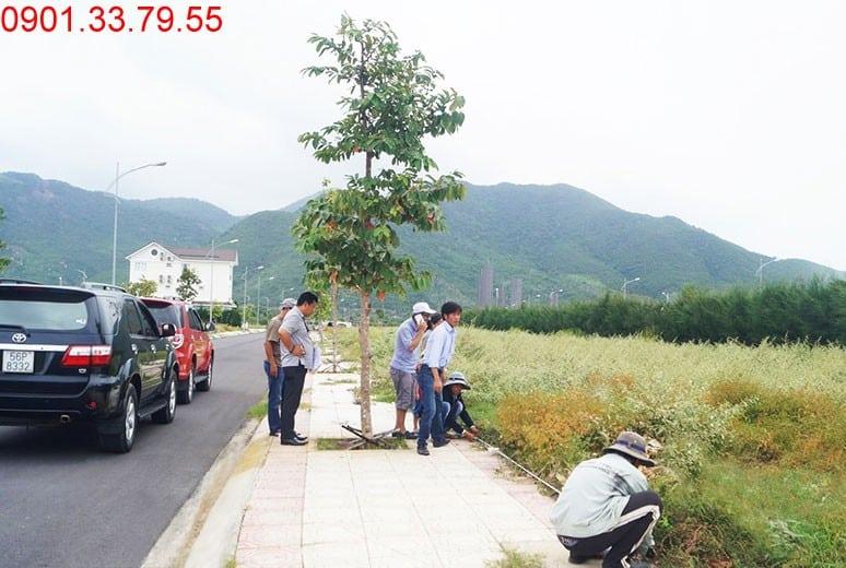 Công tác bàn giao nền cho khách hàng đợt tiếp theo Golden Bay Cam Ranh Bãi Dài