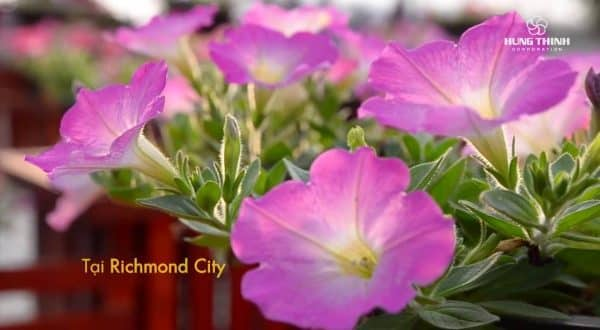 Richmond City 3