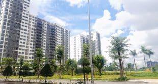 Thuê căn hộ Newcity