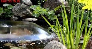 Lavita Garden 61